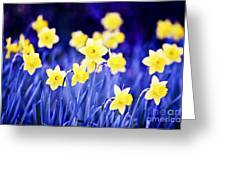 Daffodils Flowers Greeting Card