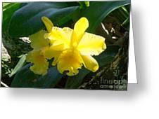 Daffodils In The Wild Greeting Card