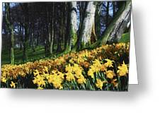 Daffodils Narcissus Flowers In A Forest Greeting Card