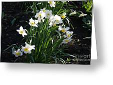 Daffodils Of Suzdal Greeting Card