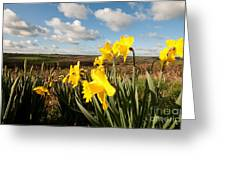 Daffs On Dartmoor Greeting Card