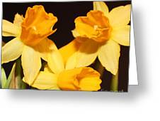 Dafodil Greeting Card by Lorraine Louwerse