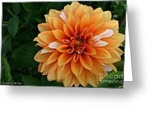 Dahlia 7001 Greeting Card