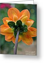 Dahlia 9001 Rearview Greeting Card
