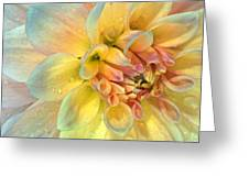 Dahlia After The Rain Greeting Card