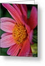 Dahlia Candles Greeting Card