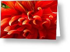 Dahlia Close Up Greeting Card