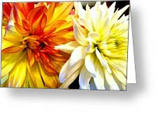 Dahlia Days Greeting Card