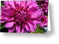 Dahlia Describes The Color Pink 1 Greeting Card