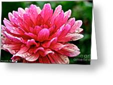 Dahlia Dew Drops Greeting Card