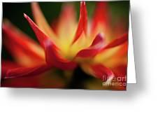 Dahlia Feuer Greeting Card