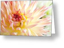 Dahlia Flower 01 Greeting Card