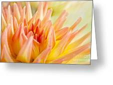 Dahlia Flower 06 Greeting Card