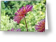 Dahlia Flower Art Print Green Summer Garden Greeting Card