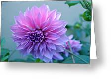 Dahlia Flower2 Greeting Card