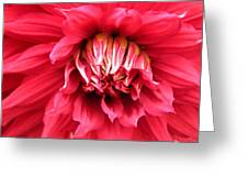 Dahlia In Red Greeting Card