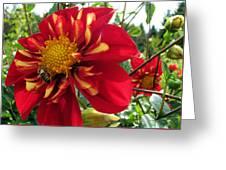 Dahlia Make My Day 1 Greeting Card