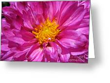 Dahlia Named Pink Bells Greeting Card