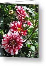 Dahlia Named Yoro Kobi Greeting Card