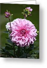 Dahlia Standout Greeting Card
