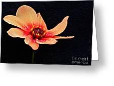 Dahlia Study Greeting Card