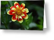 Dahlia Tear Greeting Card