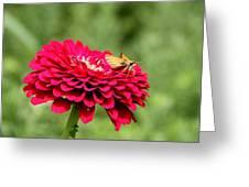 Dahlia's Moth Greeting Card