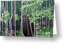Daintree Forest At Twilight Greeting Card