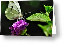 Dainty Butterfly 2 Greeting Card