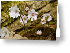 Dainty Flowers Greeting Card