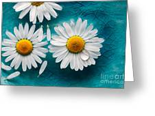 Daisies Floating In Water Greeting Card