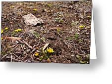 Daisies In The Dirt Greeting Card