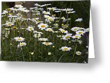 Daisy 2 Greeting Card