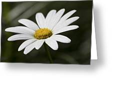 Daisy 3 Greeting Card