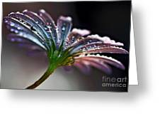 Daisy Abstract With Droplets Greeting Card