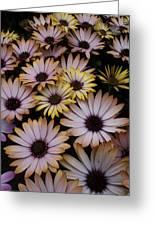Daisy Beauty Greeting Card