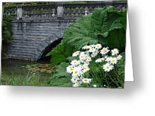Stone Bridge Daisies Greeting Card