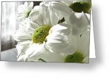 Daisy Days Greeting Card