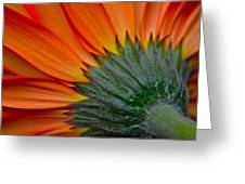 Daisy Delight Greeting Card