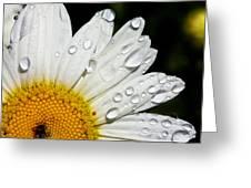 Daisy Drops Greeting Card