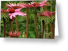 Daisy Forest Greeting Card
