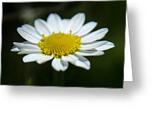 Daisy On Green Greeting Card