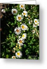 Daisy Production Line Greeting Card
