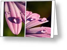 Daisy Rain  Greeting Card