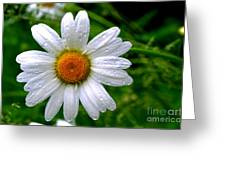Daisy Shower Greeting Card
