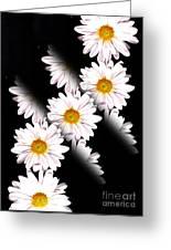 Daisy Split Greeting Card