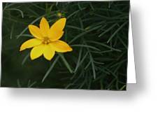 Daisy Wannabee Greeting Card