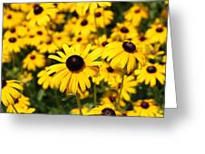 Daisys Greeting Card