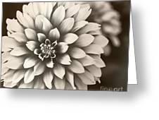 Daliha Dreams Greeting Card