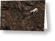 Dall Sheep Were Is Very Adapt Greeting Card